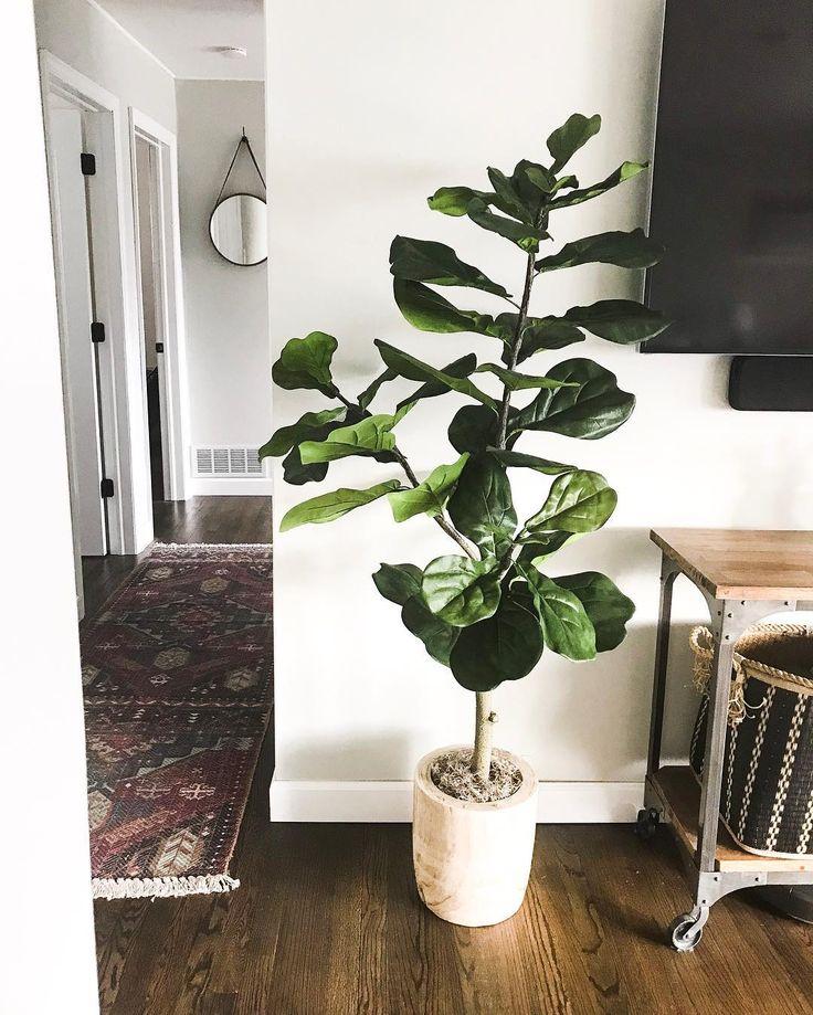 Цветовая гамма пол стены растение ковёр