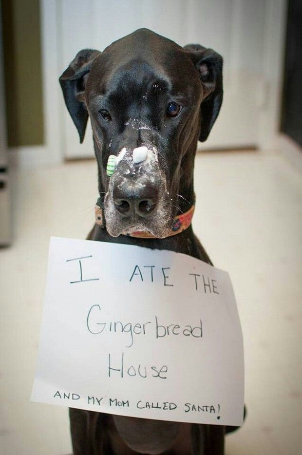 Dog just got moved to Santa's naughty list Funny Dog Shaming Pictures
