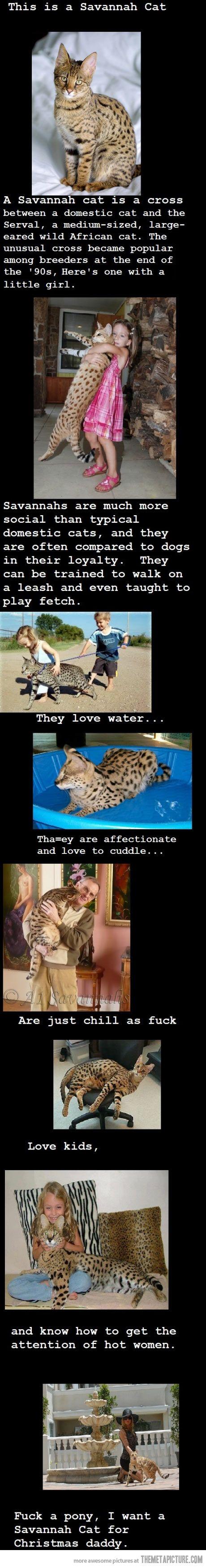 I want a Savannah cat