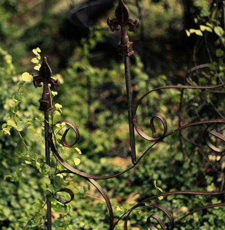 gate, vine, photography