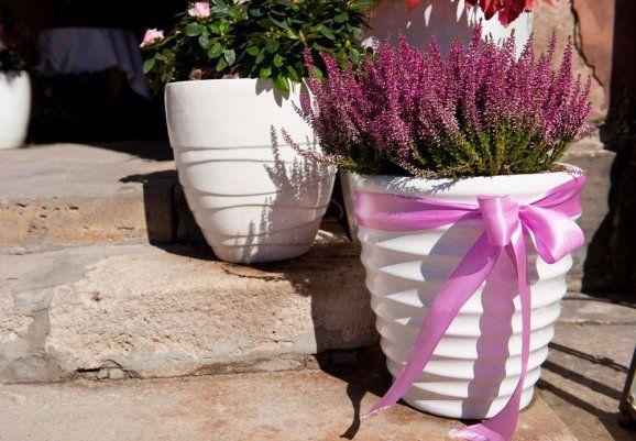 Vřesy mohou ozdobit zahradu, balkon i interiér. Co dělat, aby neuschly?