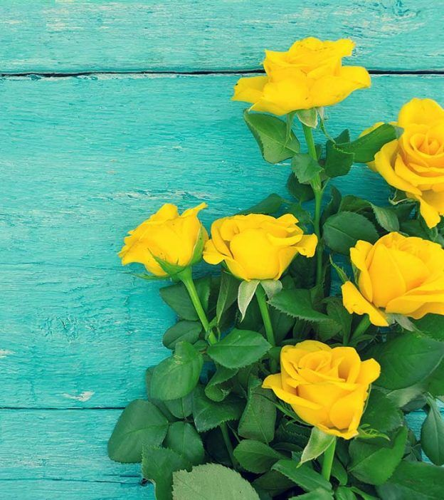 Top 10 Most Beautiful Yellow Roses | Ideas for the House