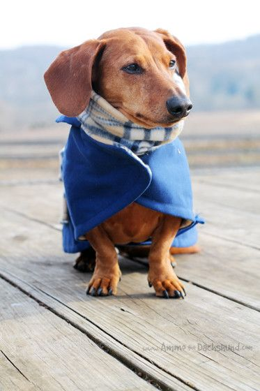 1000 Images About Wiener Dogs On Pinterest Weenie Dogs