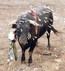 EU: Formulate a Law against Bullfighting in Spain!.