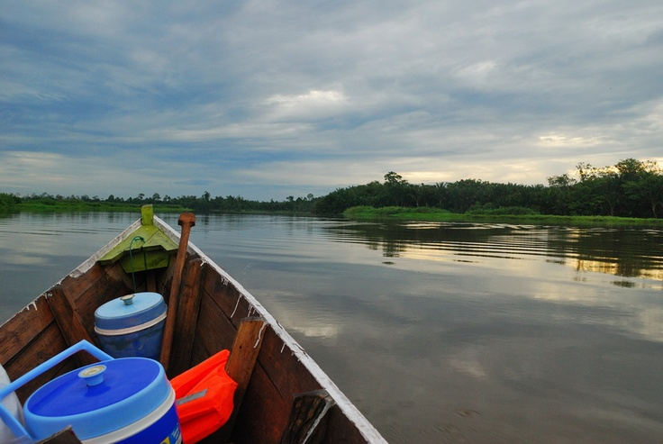 Cruising on the Alas River at sunrise, looking for wild orangutans. Aceh Province,