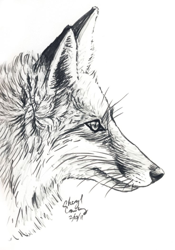 Fox Face Line Drawing : Best art pen ink images on pinterest draw
