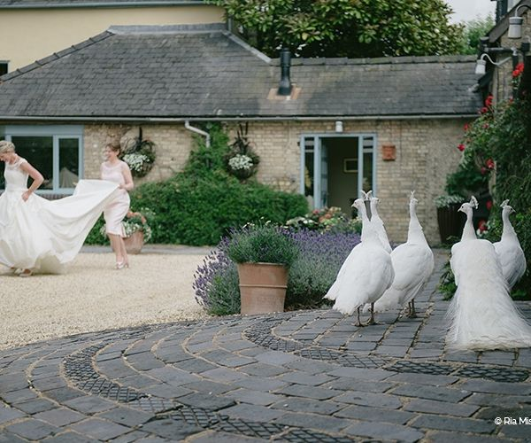 Ready for her ceremony at South Farm wedding venue in Cambridgeshire   CHWV
