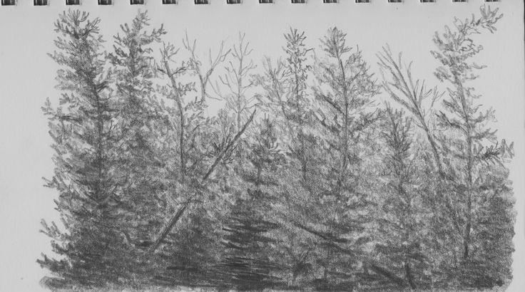 Woods by Hester Bondt