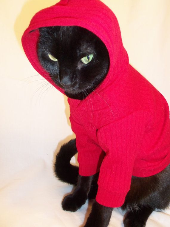 Cats in the Hood! Word.    CoolCats Knit Hoodie for Cats several colors by Rockindogs on Etsy, $19.95