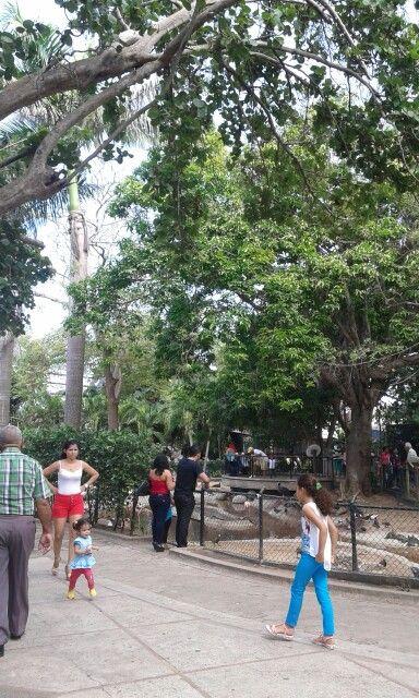 @zoobaq #Barranquilla