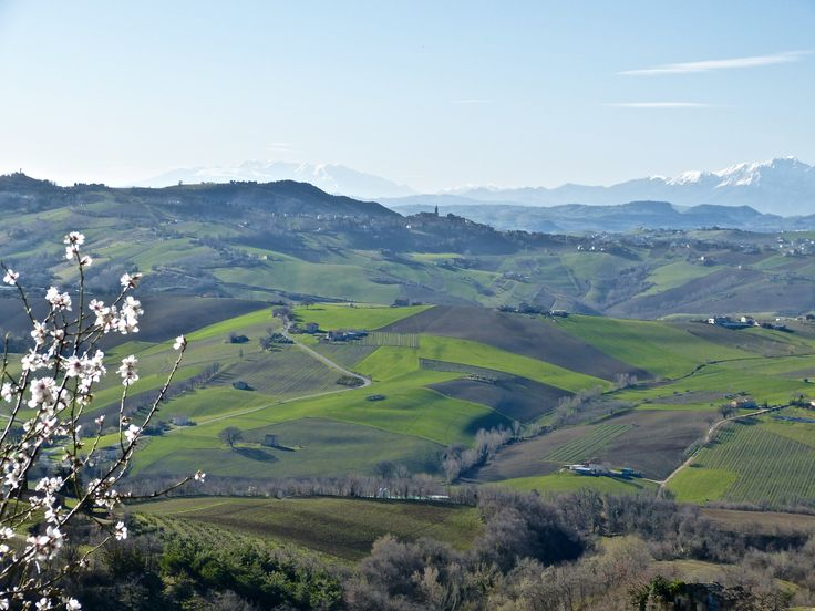 Spring in Le Marche - Almond blossom, green pastures, distant mountains