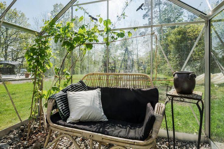 Växthus med vinranka