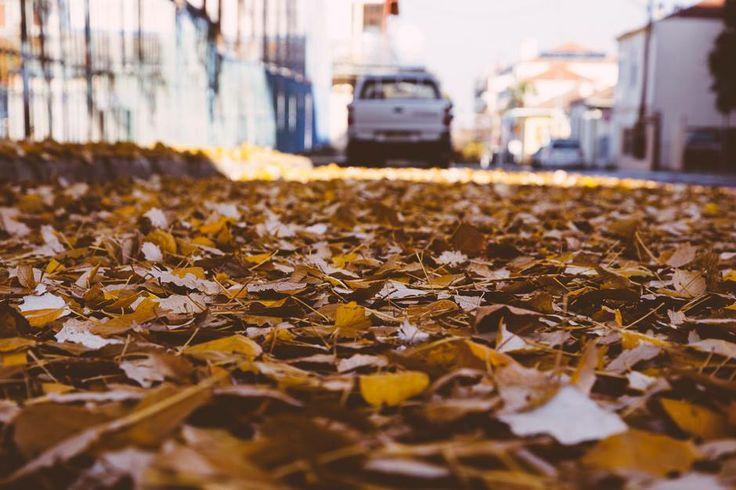 Τα σημάδια του χειμώνα.. και αυτά που αφήνει πίσω του! #arive #photo #21_01_2014 #car #leaves http://ow.ly/sMHxd