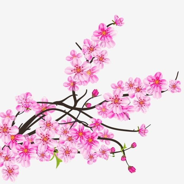 Watercolor Sakura Frame Background With Blossom Cherry Tree Branches Branch Clipart Sakura Blossom Png And Vector With Transparent Background For Free Downlo Frame Background Sakura Branch Vector