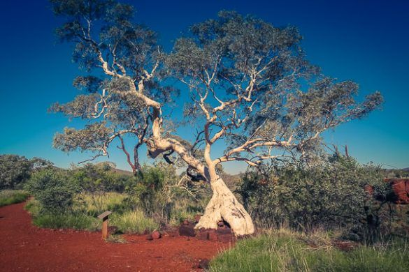 Don't miss the red mountain formations, waterfalls and gorges in Karijini National Park, Western Australia. We share how to best spend 2 days in the park!