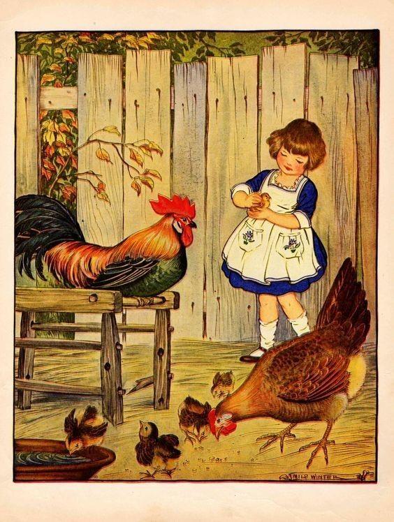 картинки кормят цыплят фото