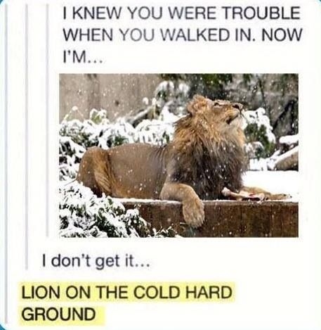 LION ON THE COLD HARD GROUND. Sorry to interuppt you Mr. Lion, but I still don't get it... ;)