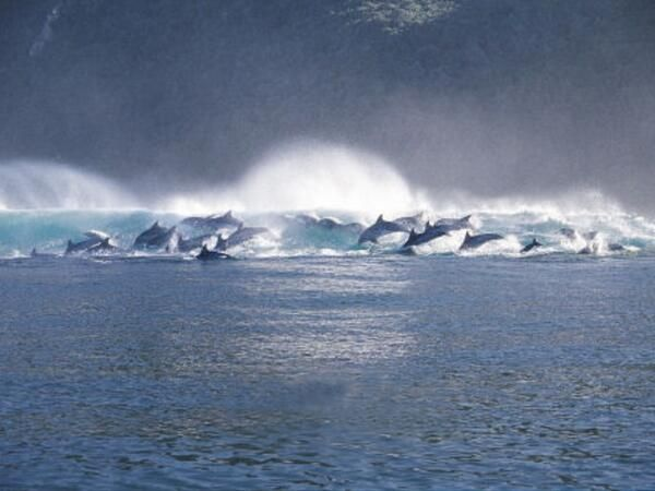 Dolphins Plettenberg Bay, South Africa :-)