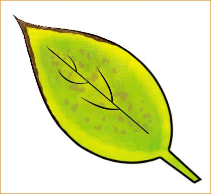 Have you noticed your yellow edges on your flowers or brown spots on your leaves? You may need a potassium boost!