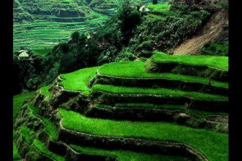Beautiful rice terrace panorama. http://www.balisurfwaves.com/
