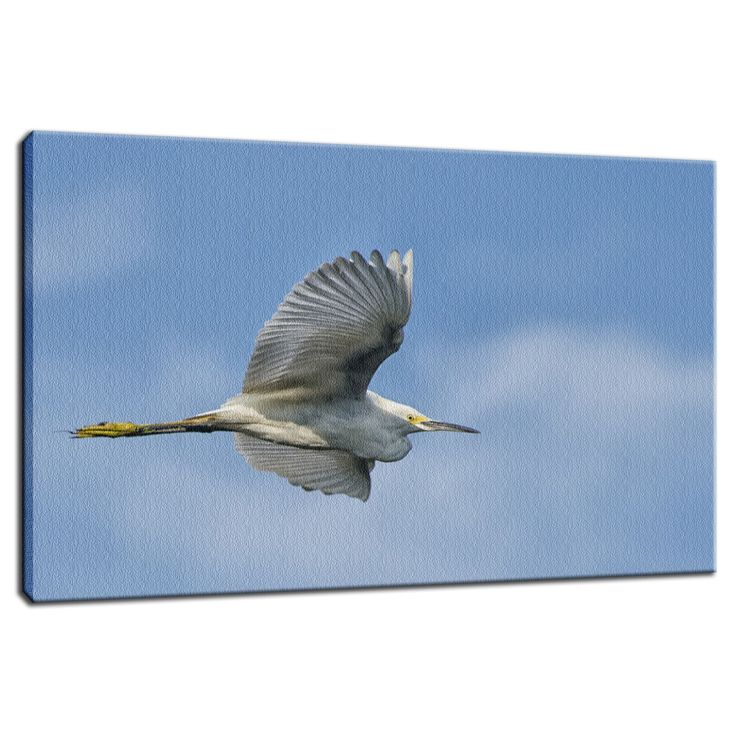 Egret in Flight  Canvas Wildlife Photography Wall Art and Limited Edition Fine Art by nature and landscape photographer Melissa Fague.   Prints are available at: www.pipafineart.com.   We would love for you to follow us at: @pipafineart   #walldecor #wallhanging #homeaccessories #homedecore #wallart #canvas #canvasart #canvasartwork #fineart #fineartphotography #wildlifewallart #wildanimals #artwildlife #homedecor #art #artwork #wallartdecor