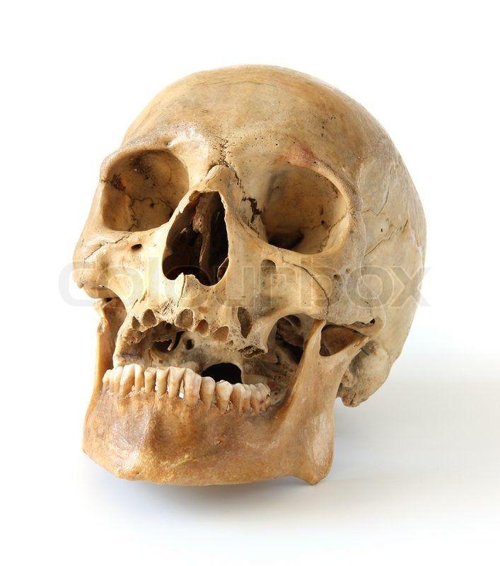 162 best skulls & bones images on pinterest   skull reference, Skeleton