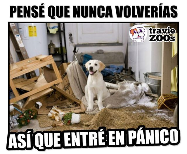 Que Bueno Que Fue Falsa Alarma Limpiamos Marley And Me Funny Animal Pictures Dog Behavior