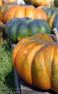 Indiana Pumpkin Patch and Apple Orchard Locations or It's the Great Pumpkin (List) Charlie Brown