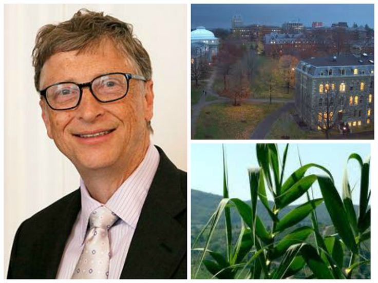 "Bill Gates is not shy about his love for GMOs, and he's putting his money where his mouth is yet again... Bill Gates Foundation Giving Millions to Top University In Order to Add a ""Stronger Voice"" to GMO ""Debate"" http://althealthworks.com/3638/bill-gates-foundation-gives-millions-to-top-university-in-order-add-a-stronger-voice-to-gmo-debate/"