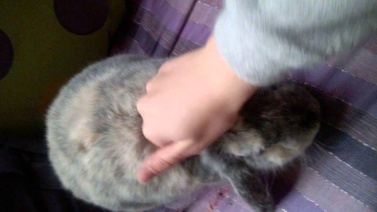 Massage du lapin 1 : le crâne - Vidéo Association Marguerite & Cie