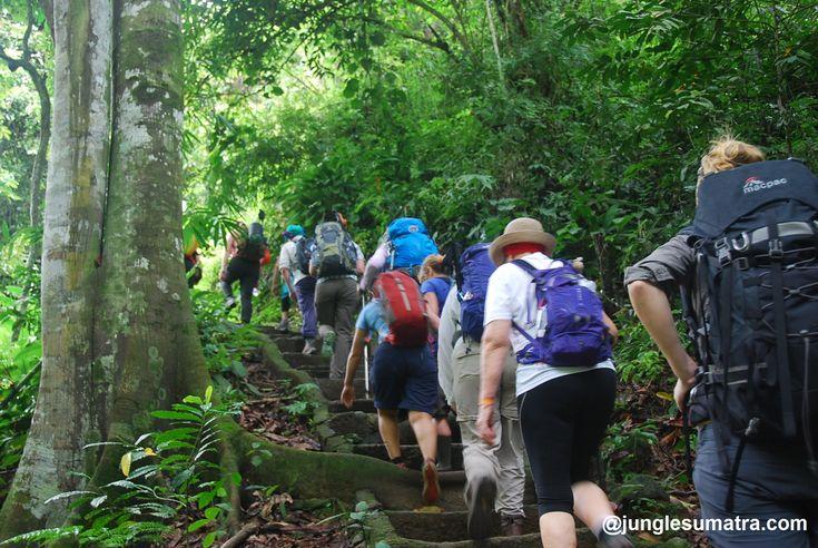 Bukit Lawang Jungle Trekking | www.junglesumatra.com | For Sumatra Orangutan Jungle Trek #orangutan #junglesumatra #jungletrekking