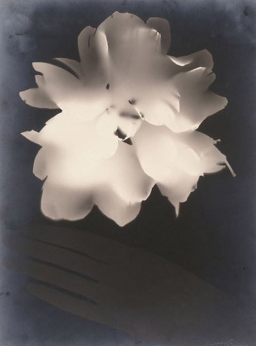 Man Ray Untitled (Peony and Glove), 1924 Gelatin silver print.