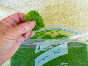 Freeze Cilantro in a Freezer Bag @ Traditional-Foods.com