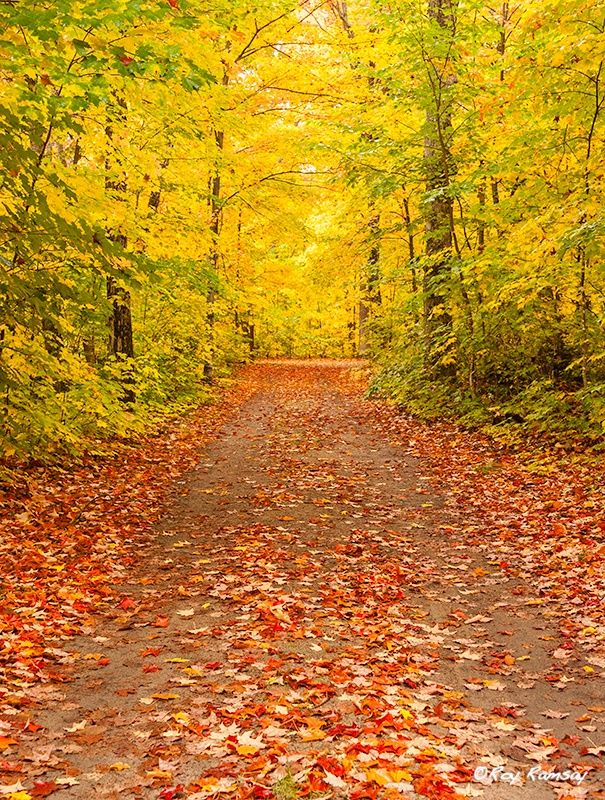 Autumn Road by Roy Ramsay on 500px One of the roads through Pog Lake Campground in Algonquin Provincial Park. Usually busy with campers and children enjoying the summer weather, is now a place of solitude as the maples lose their leaves.