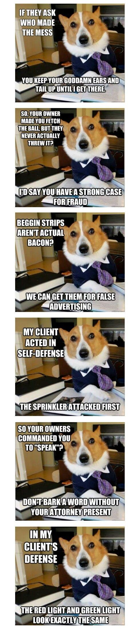 Dog lawyer memes #Memes
