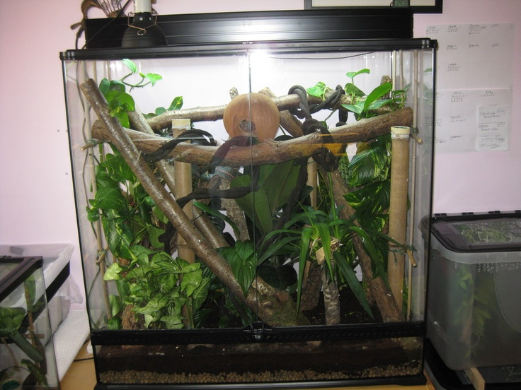 25 best vivariums and terrariums images on pinterest terrariums crested gecko and reptiles. Black Bedroom Furniture Sets. Home Design Ideas