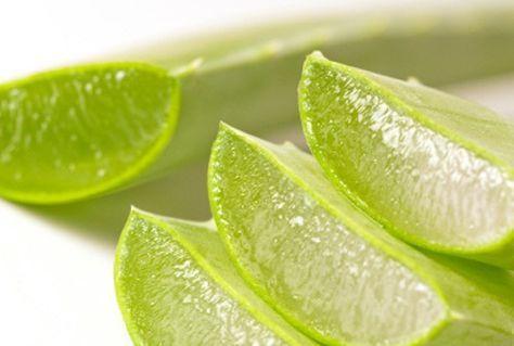Aloe vera, dispose d'acides aminés, reconstitue votre santé, vous apporte des vitamines du groupe B. Une cuillerée de gel intérieur dans une tasse d'eau tiède. Si vous y ajoutez une rondelle de citron, vous vous sentirez encore mieux