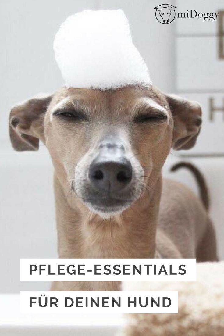 Pflege Deinen Hund mit unseren Tipps und Tricks und er fühlt sich rundum wohl.