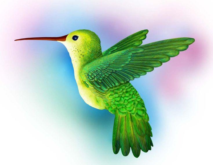 Птицы красивые картинки для детей