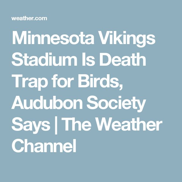 Minnesota Vikings Stadium Is Death Trap for Birds, Audubon Society Says | The Weather Channel