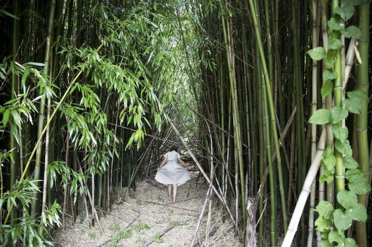 Bamboo Forest, Shelter Island, 2008  by Bastienne Schmidt