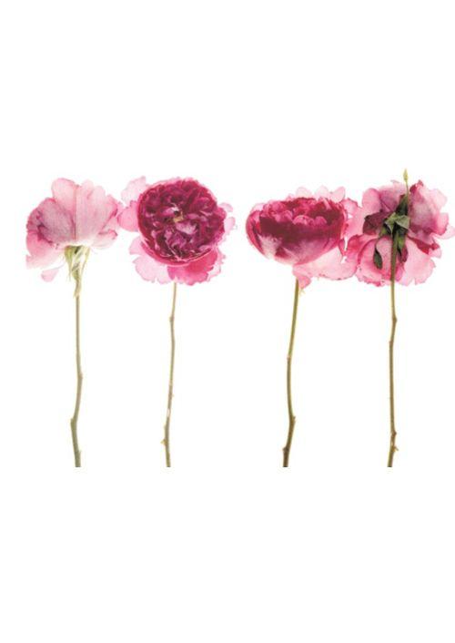 """この画像は「お見舞い=""""花を持っていく""""は本当に正解?知らないと恥ずかしいマナーを身につけよう。」のまとめの3枚目の画像です。"""