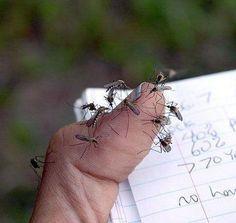 Come liberarci dell'insetto più fastidioso e tenace che affolla le nostre notti (e nel caso delle zanzare tigre, anche i giorni)? Nel video che vi proponia