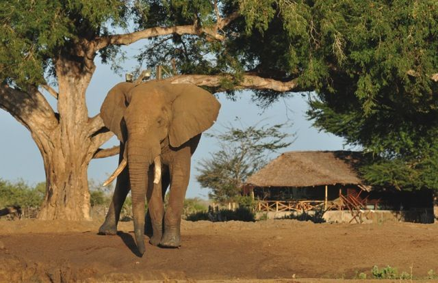 So, you're relaxing at your private safari camp and in wanders a huge bull elephant - only in Africa!