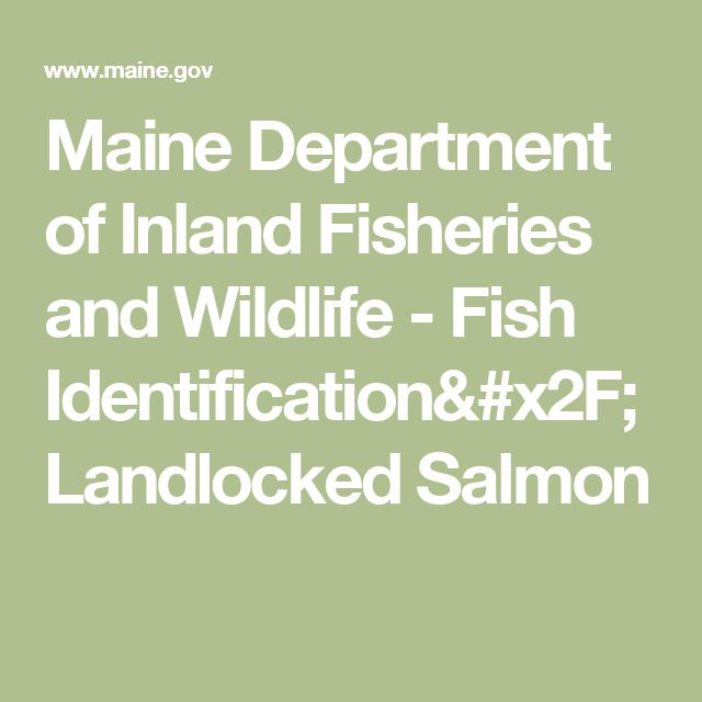 Maine Department of Inland Fisheries and Wildlife - Fish Identification/Landlocked Salmon