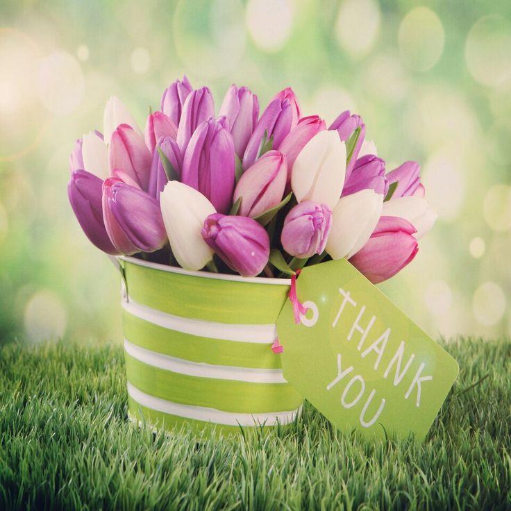 Be thankful.  Thankful Thursday!  #thursday #thankfulthursday #bethankful #thankyou #tulips #flowers #flowerpower #motivation #transformation #adventuresofjac