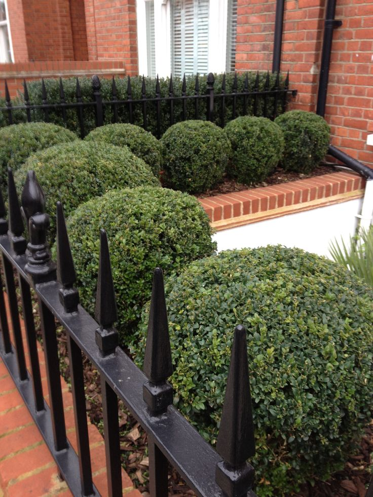 London front garden - great idea for a town terraced house entrance