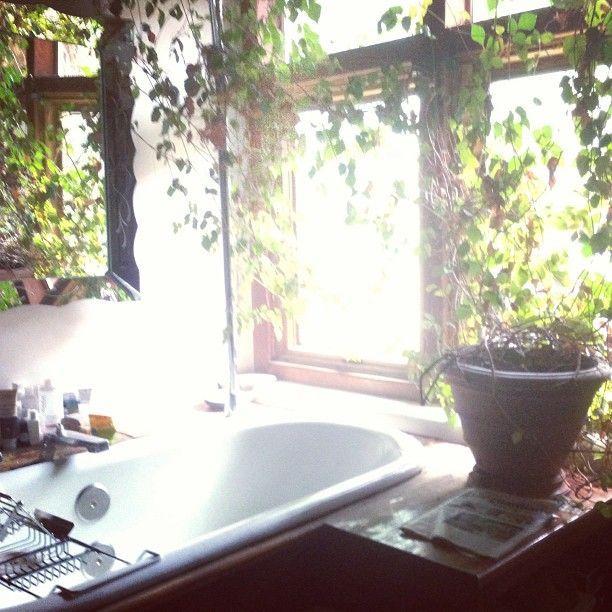 morning light morning paradise pinterest unkraut. Black Bedroom Furniture Sets. Home Design Ideas