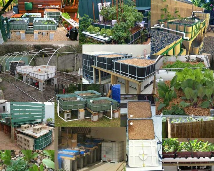 photos from aquaponics enthusiasts around the world showing off their system all based on murray hallams innovative design ibc or tote tanks are an