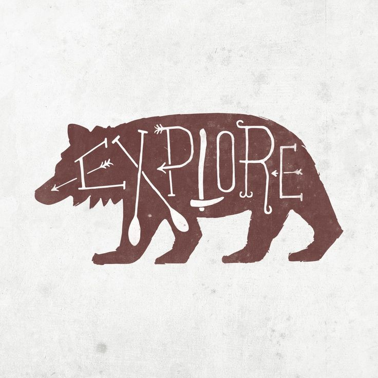 explore the insides of a bear.